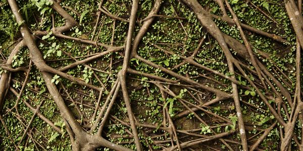 roots_bg